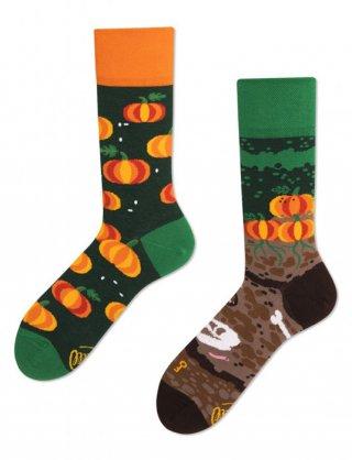 Skarpetki kolorowe MANY MORNINGS Pumpkins DYNIA - Pumpkins - Dynia